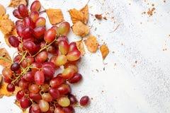 Herbstlicher Hintergrund mit reifen Trauben Stockfotografie