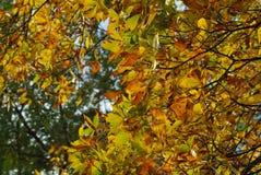 Herbstlicher melancholischer Tag Lizenzfreie Stockfotografie