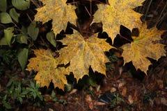 Herbstlicher melancholischer Tag Stockfotos