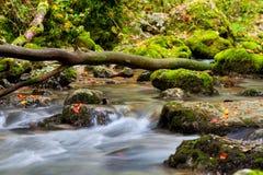 Herbstlicher Nebenfluss Stockfotos