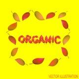 Herbstlicher organischer Hintergrund mit gelben Blättern Helle Illustration auf dem Thema des Herbstes Auch im corel abgehobenen  Stockfotos