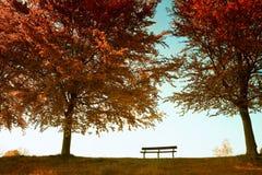 Herbstlicher Park Stockfotos