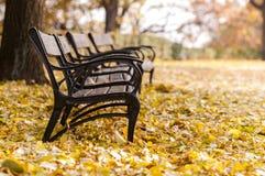 Herbstlicher Park mit Bank Stockbild