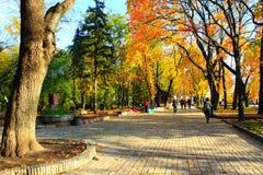 Herbstlicher Park mit Promenadenweg und großen Bäumen Stockbilder