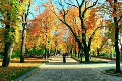 Herbstlicher Park mit Promenadenweg und großen Bäumen Lizenzfreies Stockbild