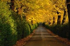 Herbstlicher Pfad Lizenzfreie Stockbilder