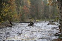 Herbstlicher schwankender Fluss Stockbild