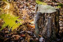 Herbstlicher Stumpf Stockfoto