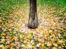 Herbstlicher Teppich Lizenzfreies Stockfoto