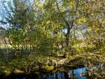 Herbstlicher Wald Stockfoto