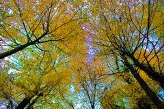 Herbstlicher Wald Lizenzfreie Stockfotos