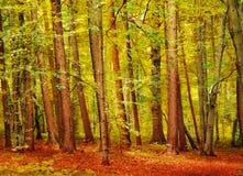 Herbstlicher Wald Stockbild