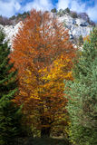 Herbstlicher Wald Stockbilder