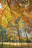 Herbstlicher Wald Lizenzfreie Stockfotografie