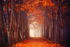 Herbstlicher Wald lizenzfreie stockbilder