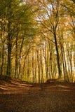 Herbstlicher Wald Lizenzfreies Stockbild