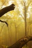 Herbstlicher Wald im Nebel Stockfotos