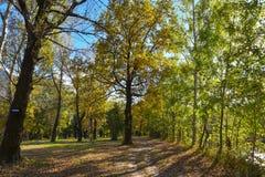 Herbstlicher Wald mit gelben Blättern Lizenzfreie Stockbilder