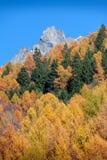 Herbstlicher Wald zeigt seine Farbe in der italienischen Alpen-Gebirgsuno Stockfotografie