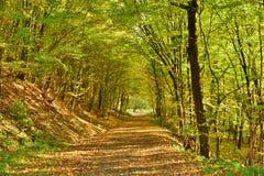 Herbstlicher Waldweg Stockfoto