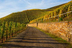 Herbstlicher Weinberg bei der Mosel in Deutschland Stockfotografie