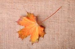 Herbstliches Ahornblatt auf Sackleinen Lizenzfreies Stockbild