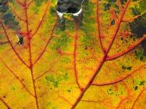 Herbstliches Blatt stockbilder