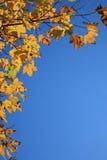 Herbstliches Blattfeld stockfotos