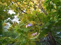 Herbstliches bubble2 Stockbild