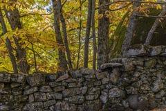 Herbstliches Detail von Kastanienbäumen im Wald hinter einem Stein-wa Lizenzfreie Stockbilder