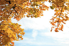 Herbstliches Feld stockfoto
