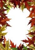 Herbstliches Feld Lizenzfreie Stockfotografie