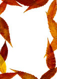 Herbstliches Feld Stockfotografie