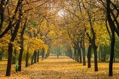Herbstliches Foto in einem Wald Stockbild