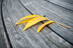 Herbstliches gelbes Blatt Stockfoto