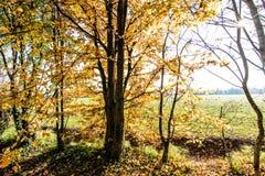 Herbstliches Holz Stockfotos