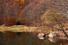 Herbstliches Holz Lizenzfreies Stockfoto