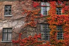 Herbstliches Laub stockfoto