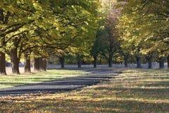 Herbstliches Laufwerk Lizenzfreies Stockfoto
