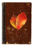 Herbstliches noch lebens- Vanitas-Konzept lizenzfreie stockbilder