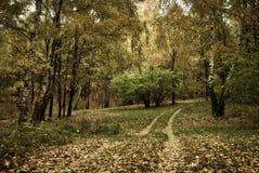Herbstlichtung mit Bäumen und der Straße stockfotos