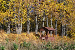 Herbstlinde Stockfotos