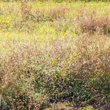 Herbstmücken Lizenzfreie Stockfotos