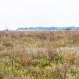 Herbstmücken Stockfotografie
