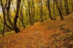 Herbstmagie lizenzfreie stockfotografie