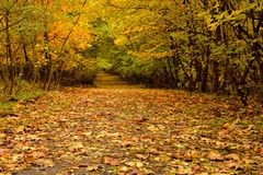 Herbstmagie Stockbilder