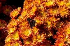 Herbstmahlzeit Stockfotos