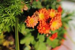 Herbstmamas Stockbilder