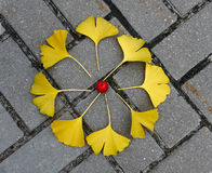 Herbstmandala Stockfotos