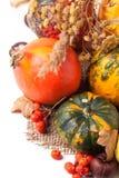 Herbstminikürbise Stockbilder
